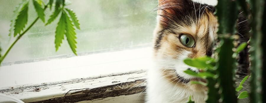 CBD Makes Your Cat Happy