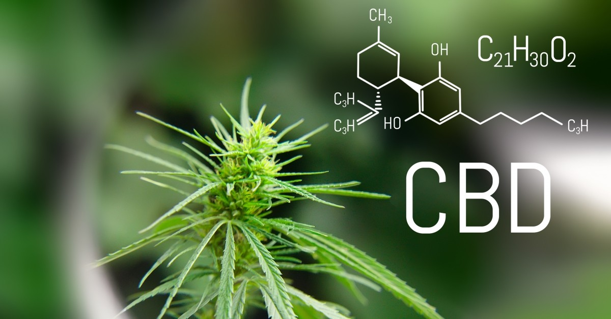 Could CBD Oil be a remedy for Epilepsy