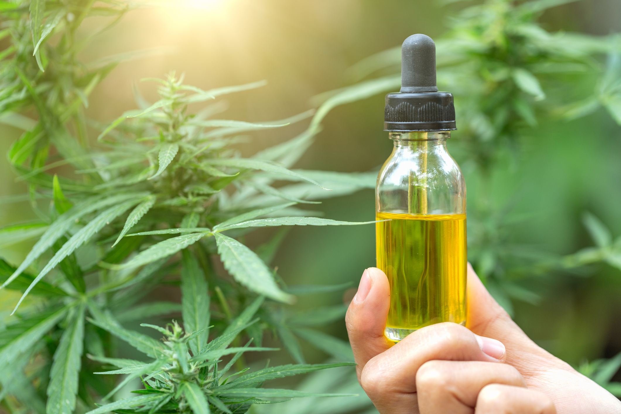 What's Making CBD So Popular