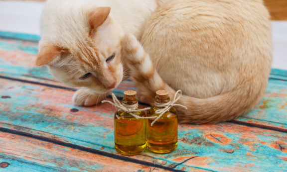 cbd oil for cat
