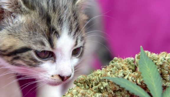 CBD for cat